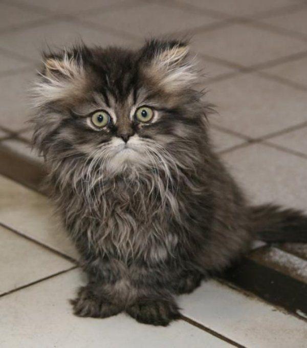 Ms Kitty S Cat Rescue Okc