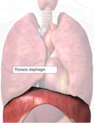 diaphragm_t