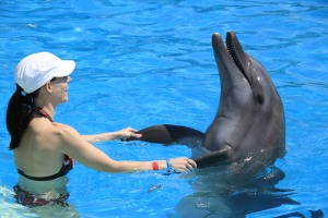 social dolphins