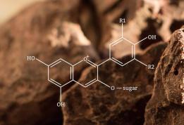 cacao molecule
