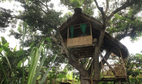 finca sarita treehouse