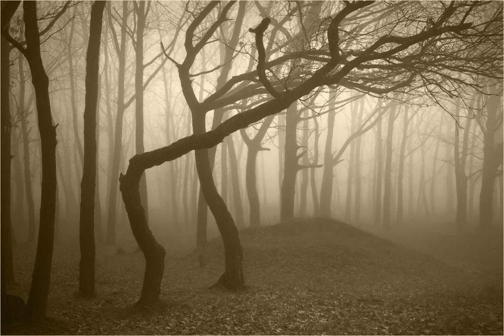 Hoia Baciu Forest - Romania
